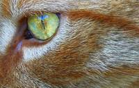 Eye of the Tigger