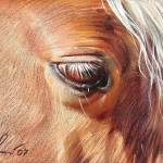 """Palomino close-up"" by yelena-bella"