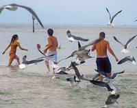 Clearwater Beach Teens and Gulls