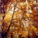 """Fall Foliage"" by memoriesoflove"