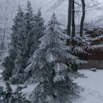 """""""Christmas tree"""" by gizmo_hungary"""
