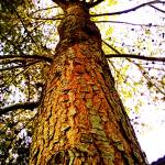 """""""UP THE TREE (EXPOSED)"""" by CHRISLAURIA"""