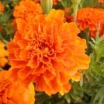 """""""Orange"""" by newtstew"""