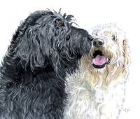 Labradoodles in Love
