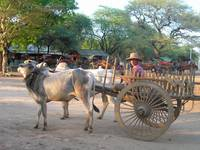 wagon in bagan