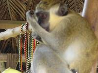 Green Monkey with Beads