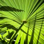 """Leaf with Zigzag Shadows"" by paulasuterphoto"