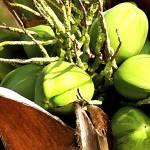 """Coconuts"" by paulasuterphoto"