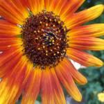 """""""Summer Flower"""" by BrandiInTheSky"""
