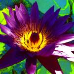 """""""Lotus Psychodelic"""" by ChrisCrowley"""
