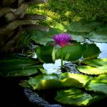 """""""Lotus by Palm"""" by ChrisCrowley"""