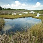 """Wetlands of Merritt Island"" by myowndesignjf"