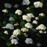 """Snowball"" by PhotographyofGrace"