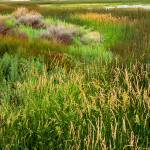 """Wetland Colors"" by rayjacque"