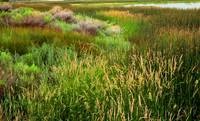 Wetland Colors