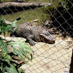 """""""Caged Croc"""" by sharppiephotos"""