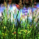 """Lake through the grass"" by alexbriffett"