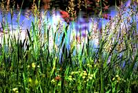 Lake through the grass