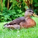 """""""Duck"""" by stein"""