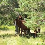 """Horses 2"" by DebraCyr"