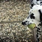 """Beloved Tennis Ball"" by whitneybee"
