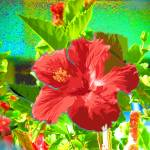 """Bright Hibiscus"" by PHOTOSRUS"