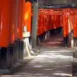 """Inari Shrine, Kyoto 2007"" by telophase"
