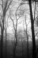Misty Woods at Dawn