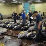 """Tsukiji Fish Market"" by tomhitchman"