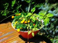 Retro planter in orange