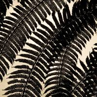 Ferns From Below Art Prints & Posters by Curtis Doell