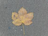 Autumn Leaf on the Summer Sands!