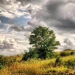 """""""Landscape / Tájkép"""" by davidvigh"""