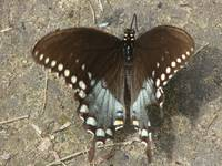 Butterfly, Pickett State Park, Tennessee