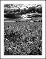 field_b&w_enhanced