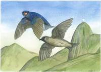 Purple Martins of Mt. Corcovado