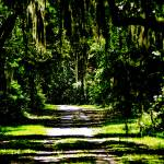 """Spanish Moss and Shadow"" by HTReeves"