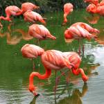 """Flamingos"" by jdmphotography1"