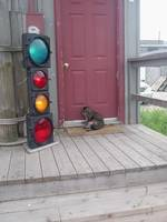 Kitty &Stoplight