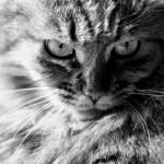 """""""Feline Fatale"""" by SmartMarmot"""