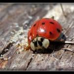 """""""Macro ladybug"""" by andelskydablik"""