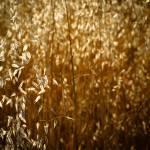 """Grain"" by TheDigiPix"