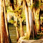 """Caddo Lake Cypress Trees"" by tnjphoto"