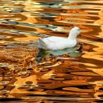 """""""Joy on Golden Lake"""" by PecoGrozdanovski"""