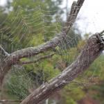 """Spider Web (IMG_3924)"" by jvandyke"
