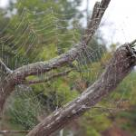 """Spider Web (IMG_3924)"" by jvandyke"