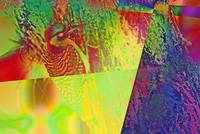 Abstract Woodpecker Bird 2