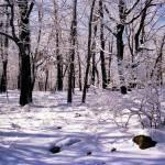 """Winter Scene in Woods"" by memoriesoflove"