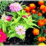 """""""Garden of Hope"""" by JoslynRamey82"""