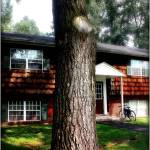 """Tree Still"" by JoslynRamey82"
